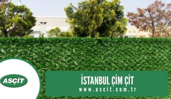 İstanbul çim çit